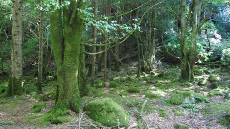 mossy: Mossy Forest