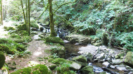 forest stream: Forest Stream Stock Photo