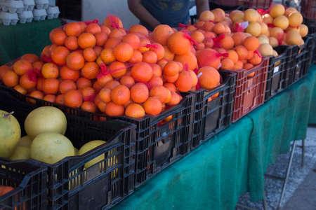 Citrus Row Stok Fotoğraf