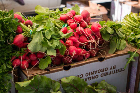 bunches: Bunches of Radishes