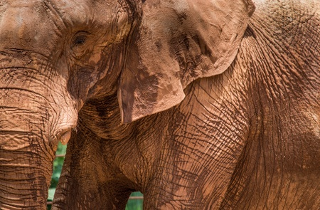 A close up of an elephant