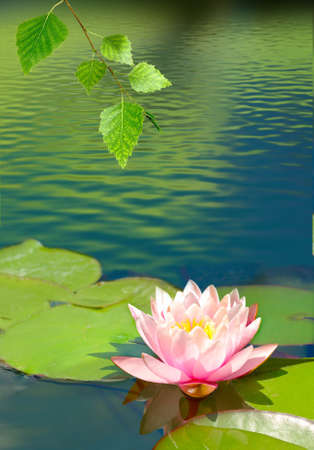 image of a lotus flower in the city pond