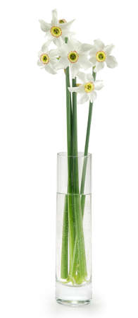 Isolated image of a vase of flowers on a white background