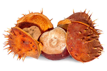 Isolated image of chestnuts on a white background Stock Photo