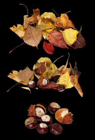 isolated image of dried leaves and chestnuts on black background