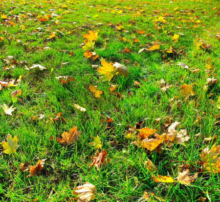 Image of dry leaves on the grass  as a background Stock Photo - 20583386