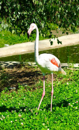 picture of one flamingos in the park near the water