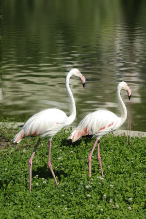 image of two flamingos in the park Stock Photo