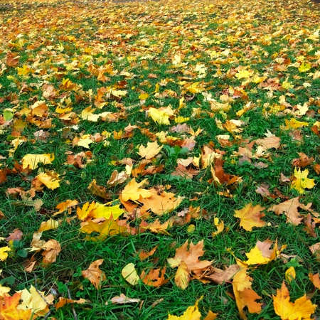 images of road  with dry leaves closeup Stock Photo - 20583377