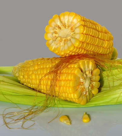 picture of two ripe corn on a gray background