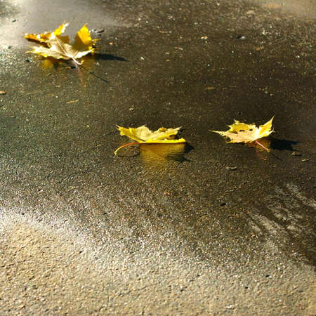 Image of dry leaves on the asphalt