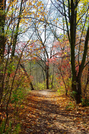 image of path in the autumn forest