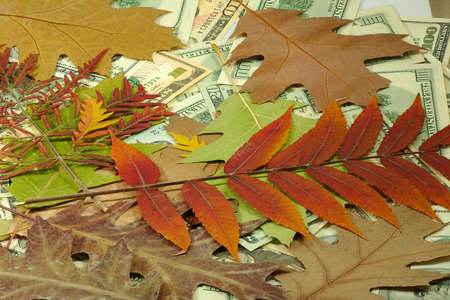 Image of money and dry leaves closeup