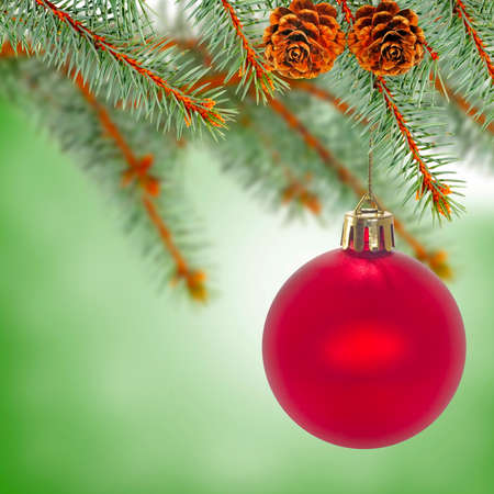 image of red Christmas ball on fir branch on a green background