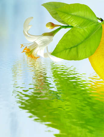 the image of lemon blossom above the water on a blue background