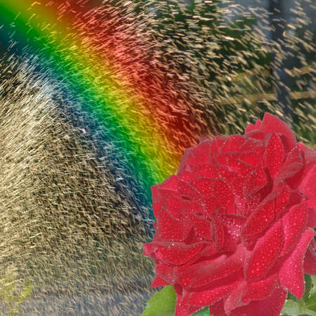 image of a rainbow and a red rose in a spray of water photo
