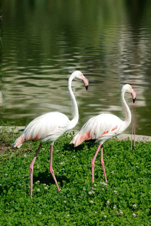 image of two flamingos in the park photo