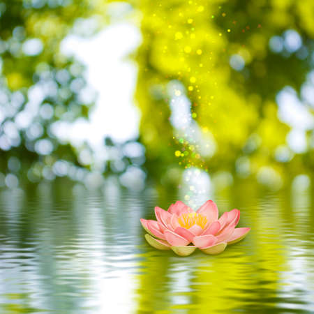 image of a lotus flower on the water against  the sun background