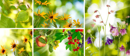 beautiful images of different plants and vegetables closeup photo