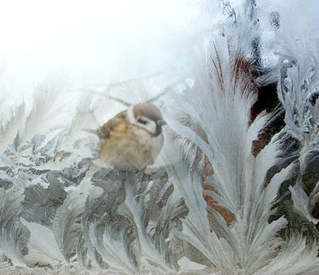 images of birds on the  frost background photo