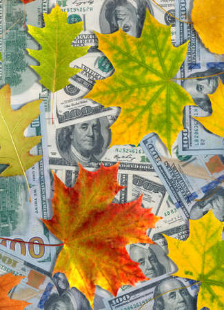 Image of dollars and autumn leaves closeup