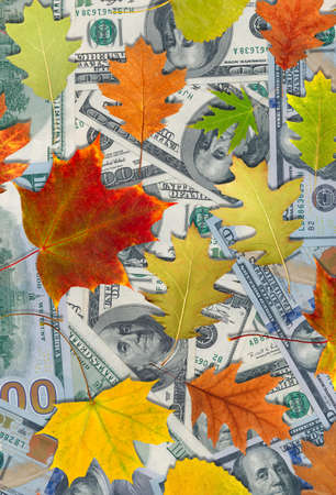 Image of dollars and autumn leaves Stock Photo