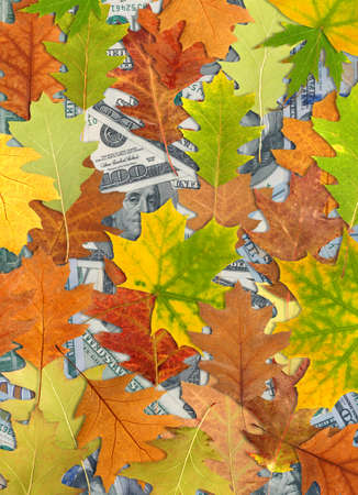 bestrew: Image of dollars and autumn leaves Stock Photo