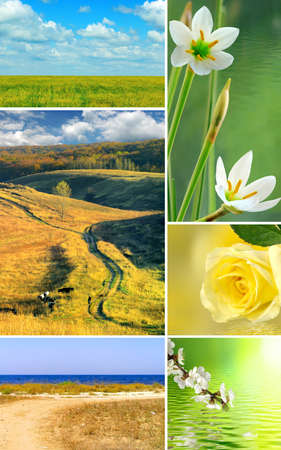 dry cow: image of different beautiful landscapes