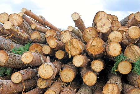 firewood: Image of firewood in the village closeup