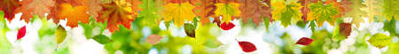 autumn leaves on a green background closeup