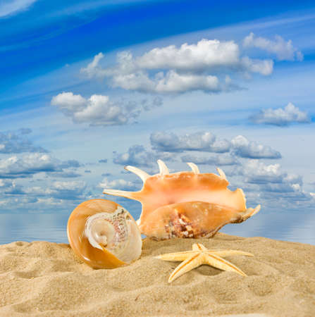 seashell on sky and water background