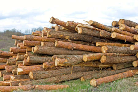 firewood: Image of firewood in the village