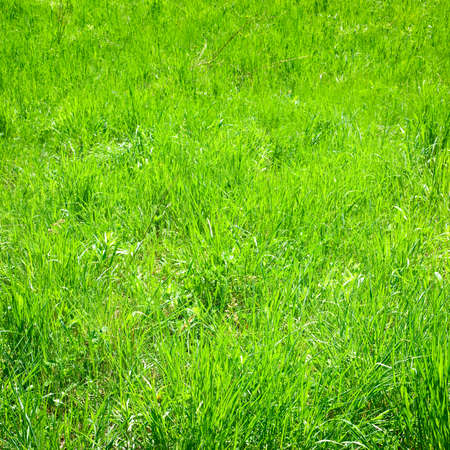 image of grass in the garden