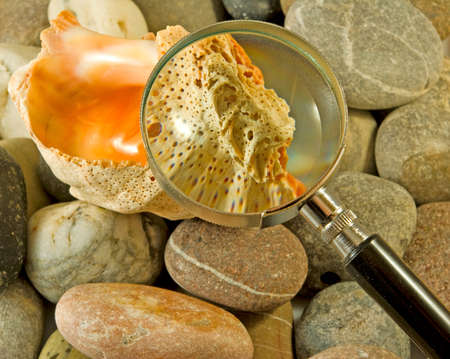 sea shells, stones and magnifier