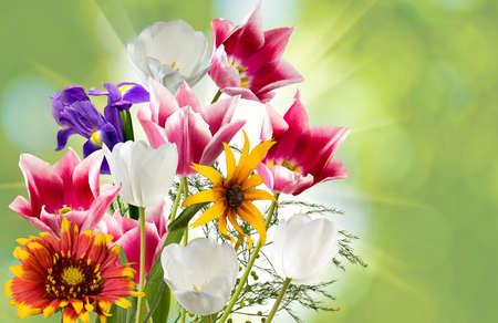 flower garden: image of beautiful flowers against the sun closeup Stock Photo