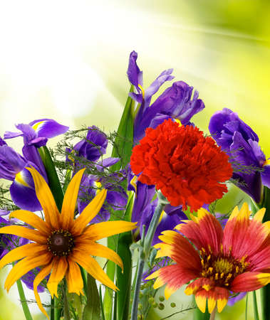 landscape flowers: image of beautiful flowers in the garden on  sunlight background Stock Photo