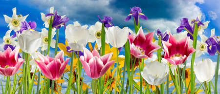 image of beautiful flowers against the sky closeup Stock Photo