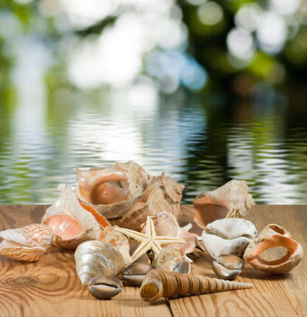 Image of different seashell on water background close-up