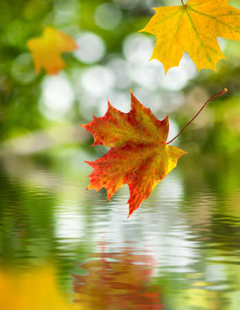 falling autumn leaves above the water Stock Photo
