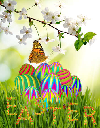 pussy willow: image of easter eggs in the grass and butterfly closeup Stock Photo