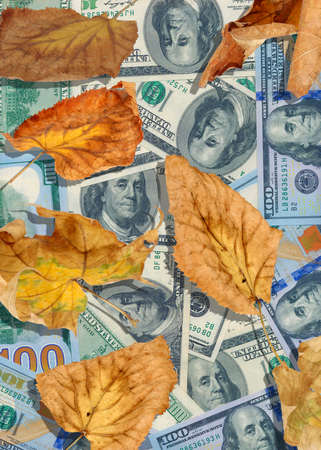 bestrew: dollars and autumn leaves closeup Stock Photo