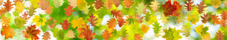 beautiful landscape: image of many autumn leaf on a green background closeup