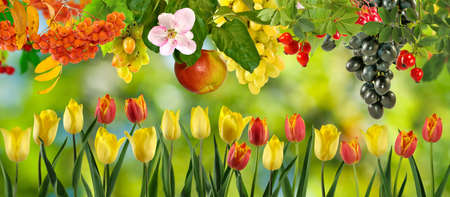 landscape flowers: image of flowers and fruits in the garden closeup