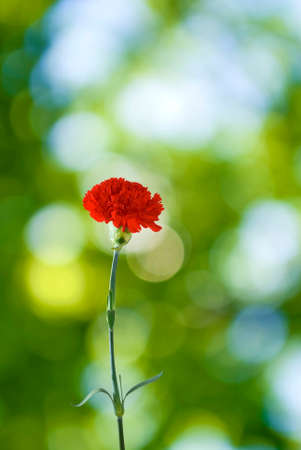 image of a single flower on a green background Stock Photo