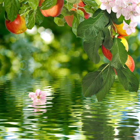fall landscape: image of apple tree over the water closeup