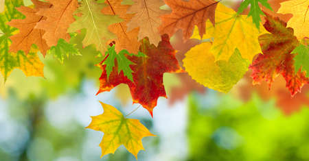 image of dry autumn leaves close up Stock Photo