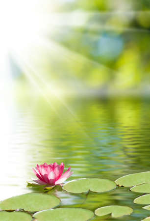 image of lotus flower on the water