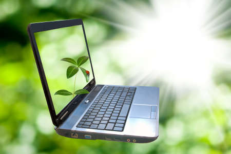 Image of a laptop on a green background. Laptop,plant and ladybug on green blurred background. Laptop represents a business theme.