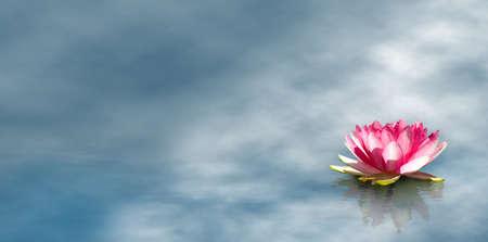 水のクローズ アップで美しい蓮の花の画像