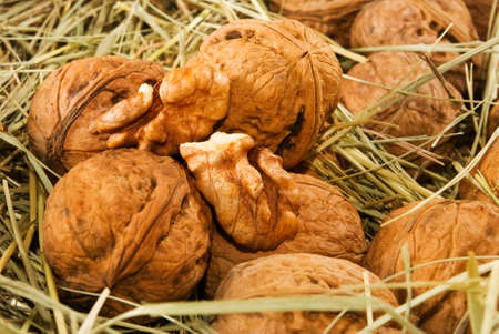 Big walnuts nuts  Ripe nuts in grass closeup Stock Photo